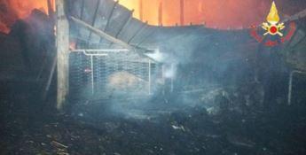 Incendio distrugge capannone a Sersale, morti carbonizzati alcuni ovini