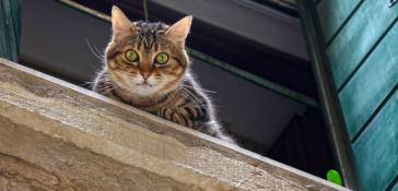 Gatto ucciso in una scuola di Gioia, la versione del bidello: «Si è ferito solo»