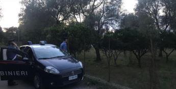 Rubavano mandarini in un terreno privato, tre arresti a Cinquefrondi