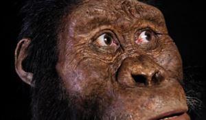 Il volto ricostruito dell'ominide
