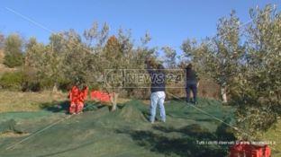 Agricoltori in protesta contro il commissariamento dei Consorzi