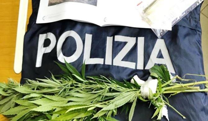 Un campione delle piante di marijuana