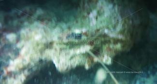 «Correte, in fondo al mare c'è una statua greca». Ma era uno scoglio