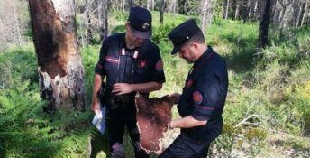 Due carabinieri forestali