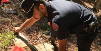 Sorpresi a tagliare alberi abusivamente, cinque denunce nel Cosentino