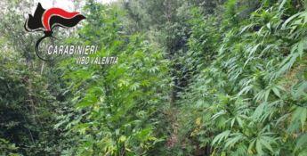Una delle piantagioni rinvenute