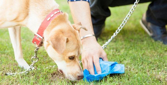 Un proprietario raccoglie le feci del cane