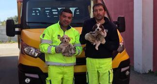 I cuccioli salvati