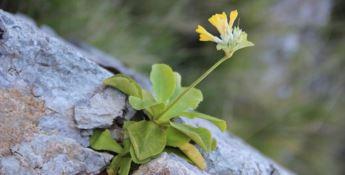 Salvaguardia della flora spontanea: la legge regionale è operativa