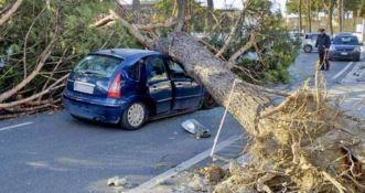 L'albero caduto sull'automobile (foto Ansa)