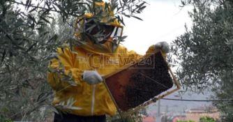 L'apicoltura in Calabria salvata dagli immigrati: la storia di Mamhud