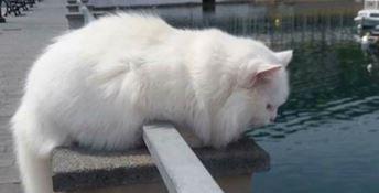 Il gatto Silvio di Vibo Marina