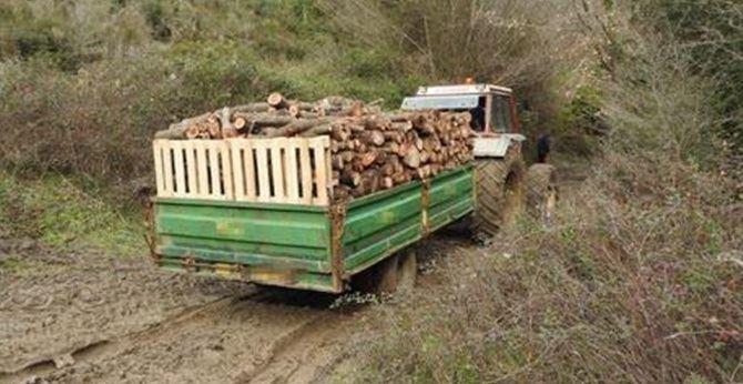 La legna sequestrata dai carabinieri