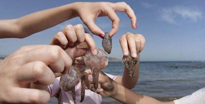 Meduse sempre più numerose nel Mediterraneo