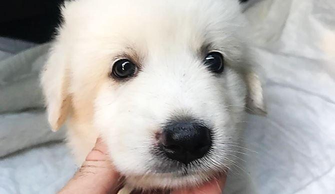 Uno dei cuccioli salvati