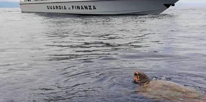 La tartaruga soccorsa