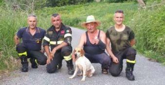Cucciolo di segugio cade in un dirupo, salvato dai vigili del fuoco