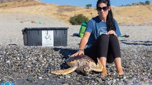 Tania Il Grande con una tartaruga marina (foto del Crtm di Brancaleone)