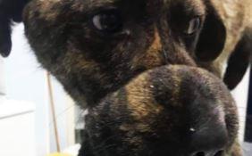 Salvo, il cane recuperato a Palmi