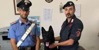 Il cane Enno con i carabinieri che hanno effettuato il sequestro
