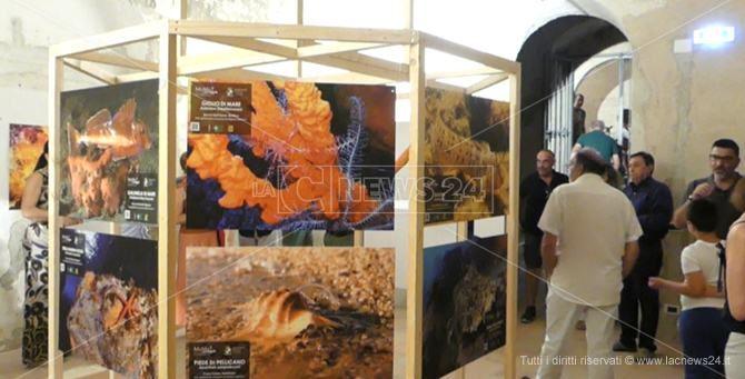 La mostra al Museo del mare