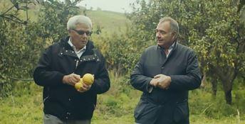 Gianfranco Capua (a destra) nel video realizzato da Dior per celebrare il bergamotto calabrese