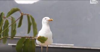 Un frame del video di RepTv