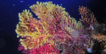 Vita marina lungo le coste calabresi