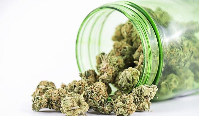 Cannabis, foto di repertorio