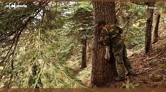 Il taglio dell'albero nei boschi del Pollino