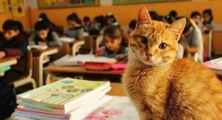 Gatto in classe