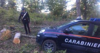 Badolato, sorpreso a rubare legna in un terreno comunale: arrestato