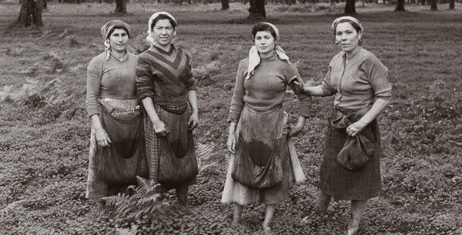 Raccoglitrici di olive in Calabria negli ani '50. Fototeca Storica Nazionale Ando Gilardi