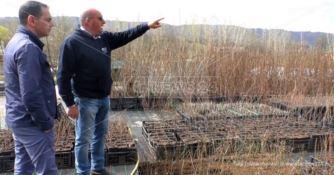 Calabria innovativa: parte da Serrastretta la lotta naturale ai pesticidi