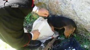 San Fili, cucciolo abbandonato in un sacco salvato dai carabinieri