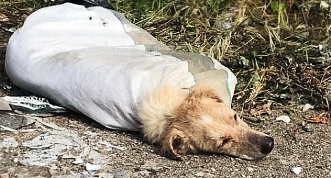 Il cane trovato a Vibo Marina