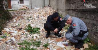 Resti umani e indumenti tra i rifiuti cimiteriali, una denuncia a Serra San Bruno