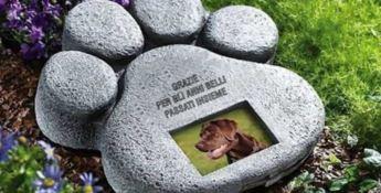Scalea, la politica pensa a un cimitero per gli animali domestici