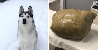 Affida il cane a una pensione, lo restituiscono morto in un sacco