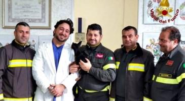 Il cane salvato a Cirò