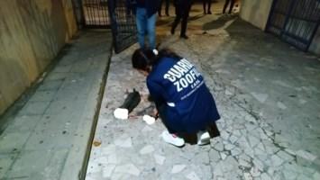 Orrore a Cosenza, gatti uccisi a bastonate in un condominio del centro
