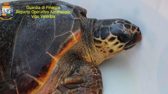 La tartaruga Golia