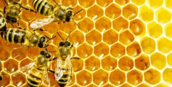 Miele... amaro, il clima ha dimezzato la produzione calabrese di qualità