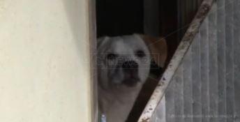 Un cane nell'appartamento