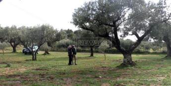 Allarme Xylella, a rischio anche l'olivicoltura calabrese