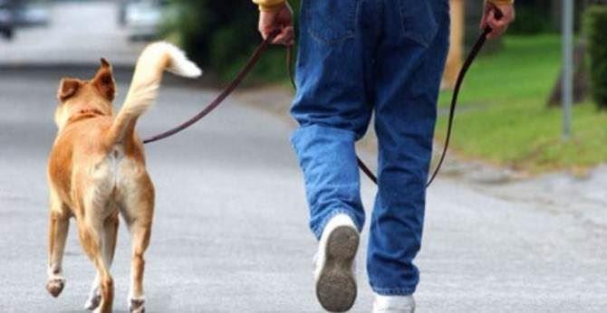 Un cane al guinzaglio