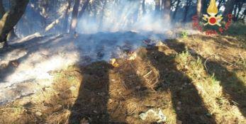 Incendio divampa a San Floro: paura per la cooperativa Nido di seta