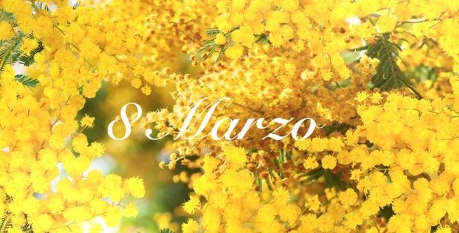 Mimose per l'8 marzo