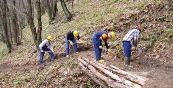 Dei lavoratori forestali