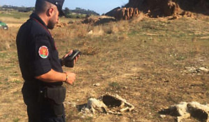 Carcasse di pecore trovate a Crotone